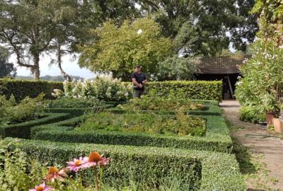 Aanleg snoeien border tuin