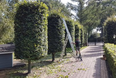 onderhoud tuin bedrijf